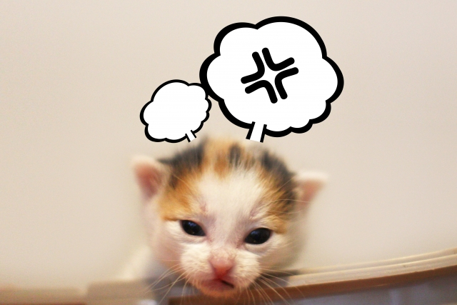 イライラする子猫